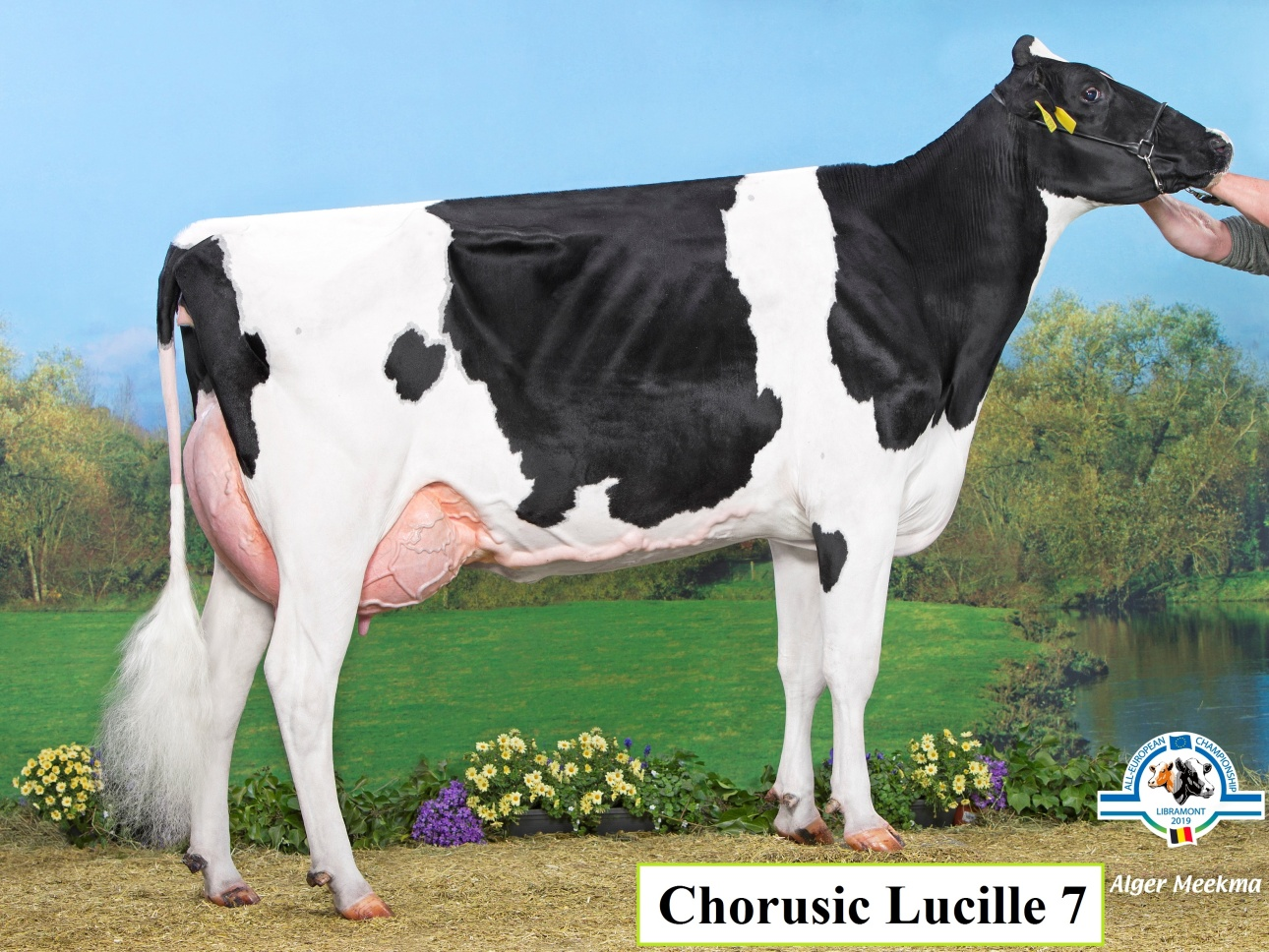 Chorusic Dreams Lucille 7 CZ433930921 EX91Dreams x Explode