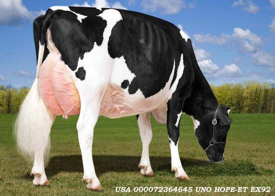 HOUSA000072364645 UNO HOPE ET EX92